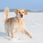Can You Teach an Old Dog a New Trick of Retiring to Snowy South Dakota?